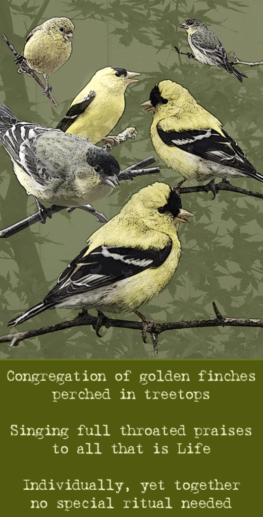 One and Many - Congregation of Finches